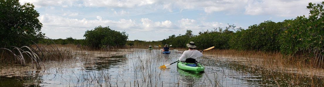 Kayaking in the Everglades